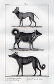 Dogs - Canidae - Mammals - Wolfdog