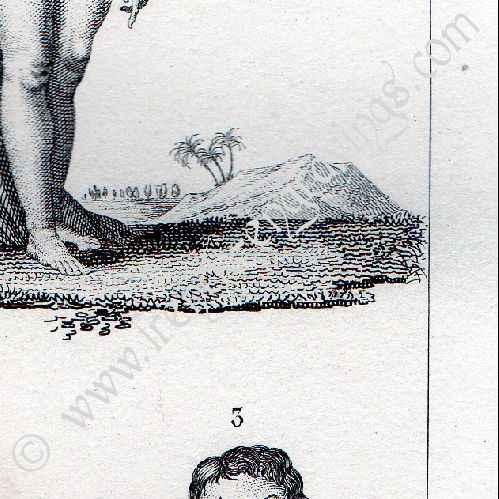 Buffon Natural History Of Man