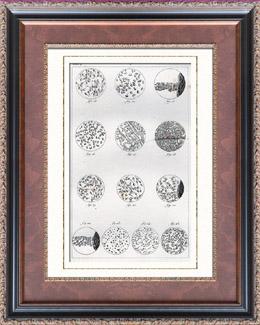 Anatomie - Buffon - Médecine Vétérinaire - Cellules - Biologie cellulaire - Cytologie