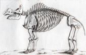 Gravure de Buffon - Squelette du Grand Mastodonte - Mammutidae  - Mammifères - Espèce disparue