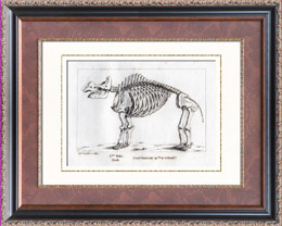 Buffon - Squelette du Grand Mastodonte - Mammutidae  - Mammifères - Espèce disparue