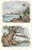 Stich von Tonga Inseln - Tonga Tabu - Tongatapu - Kampf der Matrosen des Astrolabe gegen die Inselbewohner - Gigantischer Baum im Moua
