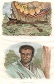 Fidschi Inseln - Viti Inseln - Waffen und Verzierungen - Vanuatu - Einwohner von Malekula