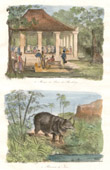 Print of Java - Indonesia - Bankalang - Music of the Sultan of Bankalang - Rhinoceros of Java