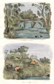 Antique print - Australia - View of the French River - Kangaroo Hunt