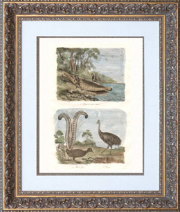 Australia - Indigenous Australians - Pirogue in Bent Bark - Emus - Casoar - Lyrebird - Menuridae