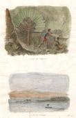 Madagaskar - Baum der Reisenden - Ansicht f�r Tintingue