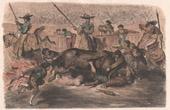 Ein Banderillero in Gefahr - Stierkampf - Stier - Torero - Matador (Spanien)