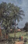 Landscape - Slave Coast (West Africa)