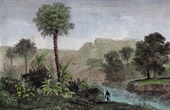 Palmen - Corypha Cerifera (Brasilien)