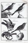 Birds - Curruca arundinacea - Prunella modularis - Dunnock - Bird