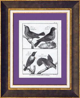 Vögel - Gros-bec - Kernbeißer - Queue en éventail - Bird Tail fan