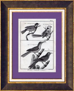 Vögeln - Vogelkunde - Meisen - Baumläufer