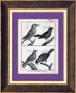 Vögel - Gros-bec - Kernbeißer - Ortolan