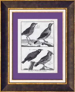 Vögel - Roi-fourmilliers - Schmetterlingsastrild - Gracula - Seidenschwanz - Sperlingsvögel