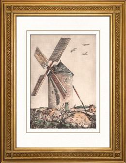 Sammlung Französische Mühlen 61/68 - Windmühle - Montforton - Ternay (Vienne - Frankreich)