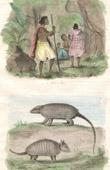 (Paraguay) - Toba Indianer - Ethnische Gruppe - Gürteltiere - Säugetiere