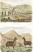 Ruins of Tiahuanaco - Tiwanaku - Pre-Columbian era - Llamas (Bolivia)