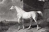 Racehorse - Arbutus by Walton