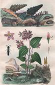 Weichtiere - Mollusken - Insekten - Blumen - Melastoma