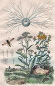 Insekten - Gew�chs - Pflanze - Johanniskr�uter - Hypericum