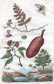 Insekten - Gew�chs - Pflanze - Fruchten