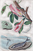 Flowers - Fish - Insects - Molluscs - Mollusk - Clitore - Clubione - Clythre