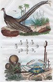 Bird - Crab - Mushroom - Lycoperdon - Argus - Lupee
