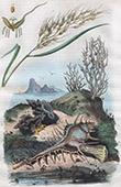 Gew�chs - Pflanze - Reis - Weichtiere - Mollusken