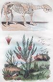 Squelette de Mégathère - Plante - Fleurs - Mélaleuque