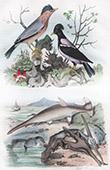 Uccello - Pesce - Pesci - Squalo - Pescecane - Selachimorpha - Pesce Martello - Martin Pescatore