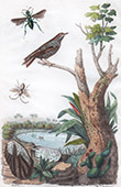 Conchiglia - Mollusco - Insetti - Uccello - Sturnidae - Etourneau - Euc�re - Euglosse - Etherie
