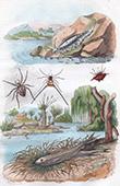 Molluschi - Pesce - Ragni - Eolide - Epeire - Eperlan