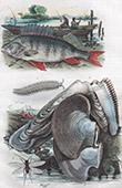 Conchiglia - Mollusco - Pesce - Perche - P�ripate - Perle - Perne