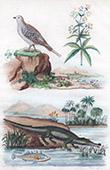 Krokodile - Gavial - Vogel - Ganga - Spießflughuhn