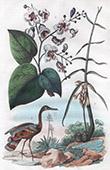 Blumen - Catalpa - Cassumunar - Vogel - Sonnenralle