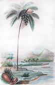 Coconut Tree - Palm Tree