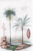 Baum - Palmen - Cyathee - Cycas