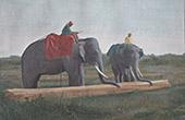 Ceylon - Sri Lanka - Transportation of wood by the elephants (India)