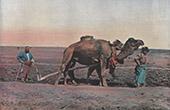 Turkmenistan - Central Asia - Teke - Turkmen tribe - Agriculture