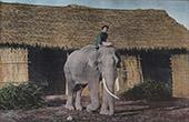 Cochinchina - Vietnam - Elephant working