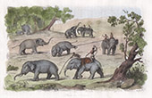 Myanmar - Elefant Jagd