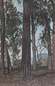 Papua-Neuguinea - Baumen - Eisenholz