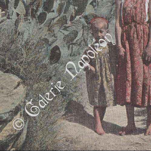 gravures anciennes champ de cactus figuier de barbarie alg rie photochromie 1890. Black Bedroom Furniture Sets. Home Design Ideas