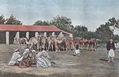 Nomads - Merchant of camels (Algeria)