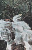 Franska Polynesien -  - Sällskapsöarna - Vattenfall i Moorea