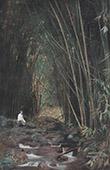 Franska Polynesien - Tahiti - Distrito av Taravao - Bambu skog