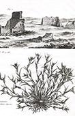 Flora und Ruine in Russland - Graminis Singularis Species