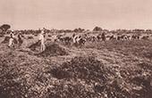 Gr�da av Jordn�ter (Sudan - V�stafrika)