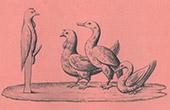 Collection of the Secret Cabinet - Erotica - Phallus - Priapus - Cock